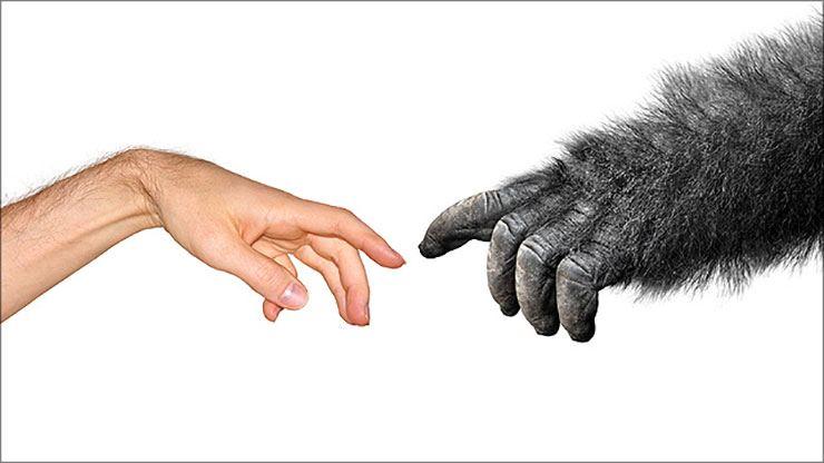 evolutietheorie-natuurlijke-selectie1